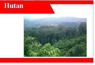Hutan-adalah-jenis-manfaat-sebaran-dan-inventarisasi